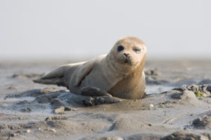 Image result for harbour seals chichester
